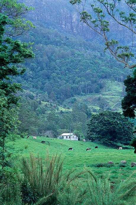 Rainforest Writing Retreat at O'Reilly's