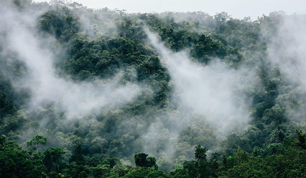 Daintree Rainforest mist