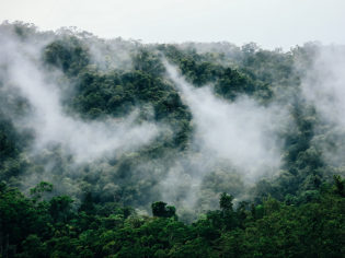 Daintree Rainforest mist