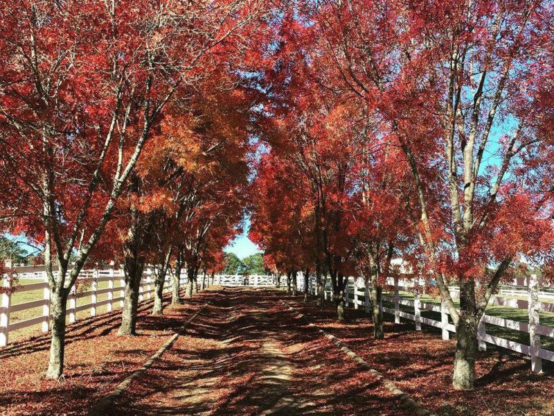 bilpin autumn nsw