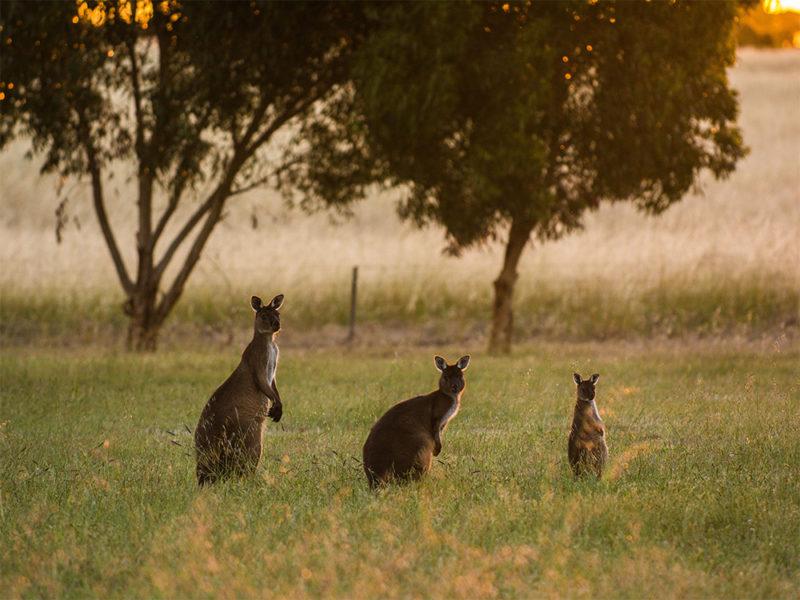 Kangaroo Island South Australia