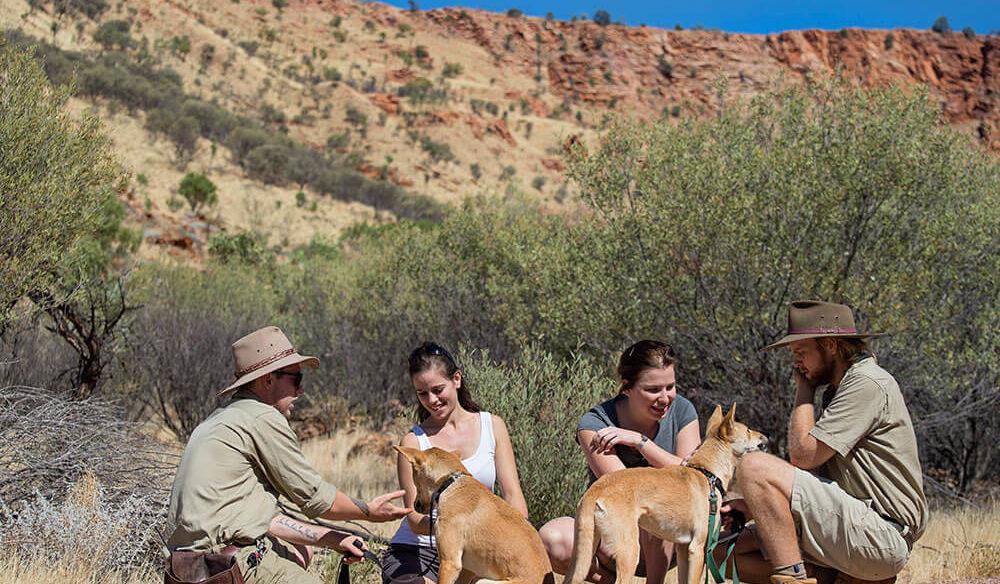 Dingo encounter