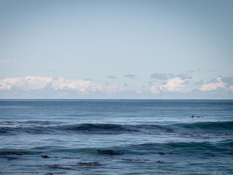 Rosie Hastie - dolphins in the ocean