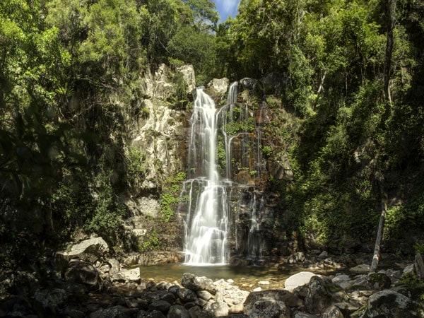 Wander through the Minnamurra Rainforest