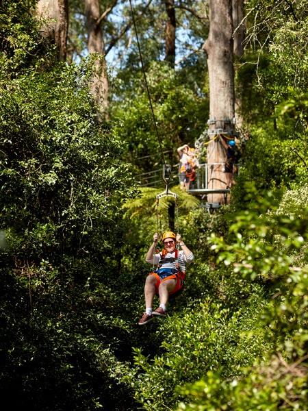 Have fun at Illawarra Fly Treetop Adventures