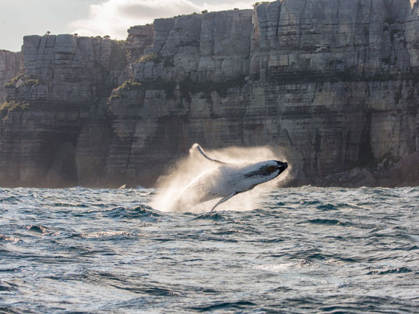 Watch whales at Jervis Bay