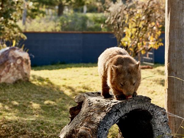 Visit Symbio Wildlife park
