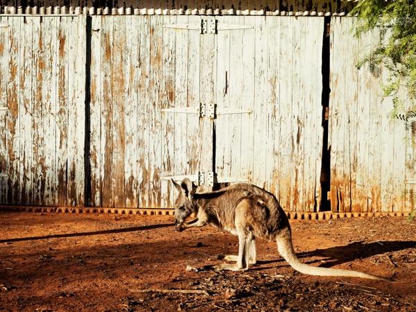 Australian wildlife at Trilby Station